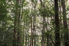 Vétyemi-ősbükkös