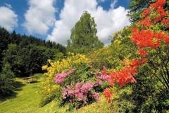 Zalaegerszeg: Rododendron-völgy